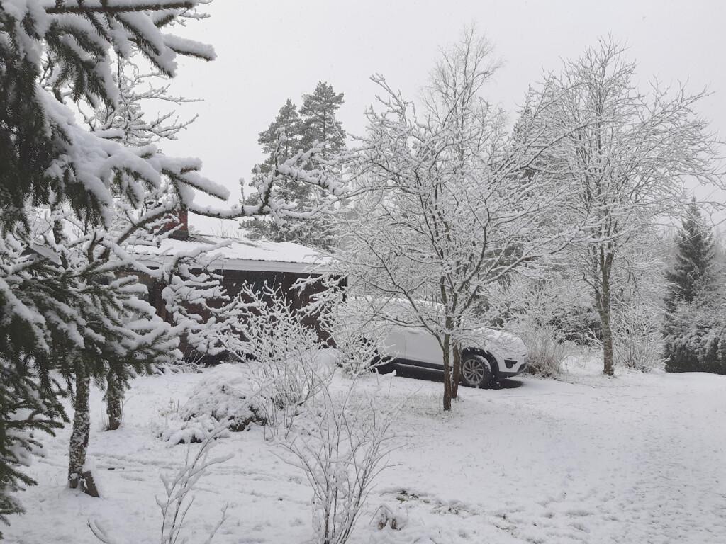 luminen piha